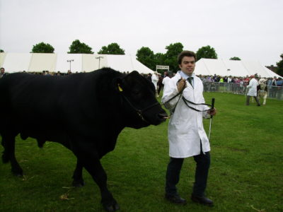 Showing cattle in England
